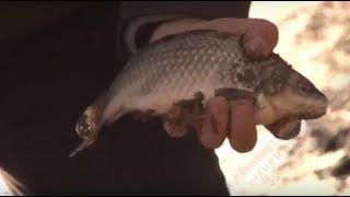 Ловля карася весной. Рыбалка на КАРАСЯ весной на малой реке. Карась на донку