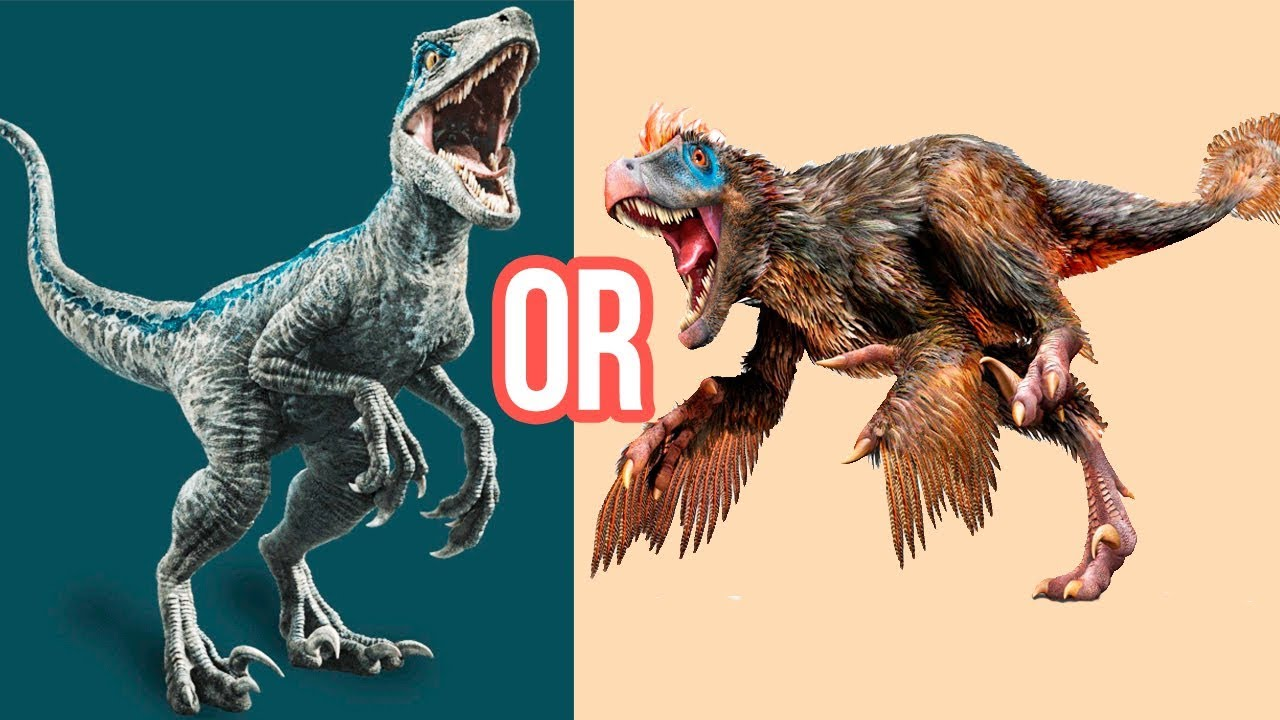 VELOCIRAPTOR: 10 Facts You Should Know About This Dinosaur