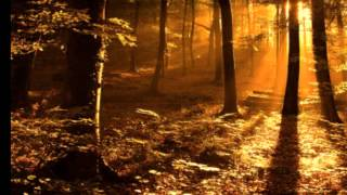 If these trees could talk - The sun is in the north