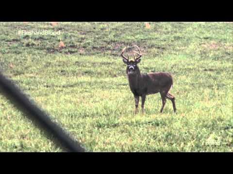 Stolen Missouri Deer- Hank Parker