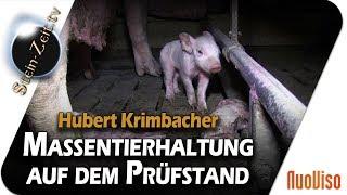 Massentierhaltung auf dem Prüfstand - Hubert Krimbacher bei SteinZeit