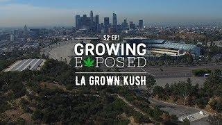 Growing Exposed Season 2 Episode 1: LA Grown Kush