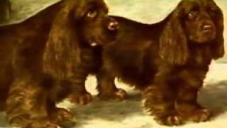 Sussex Spaniel  Chapter 1