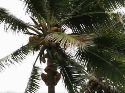 KAP Polynesian Hero