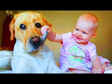 Dog Vs Cat funny pranks   try not to laugh