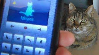 Андроид и кошка, приложение. Прикол