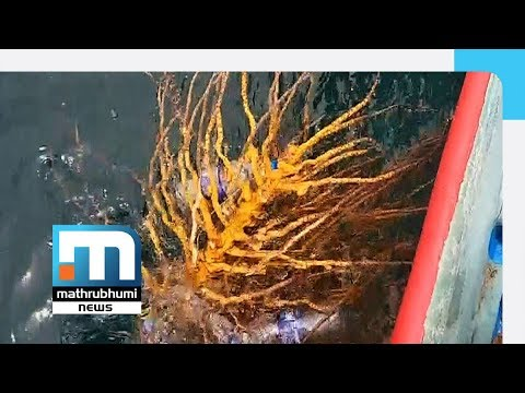Illegal Fishing Using Plastic Bottles Going On In Kollam| Mathrubhumi News
