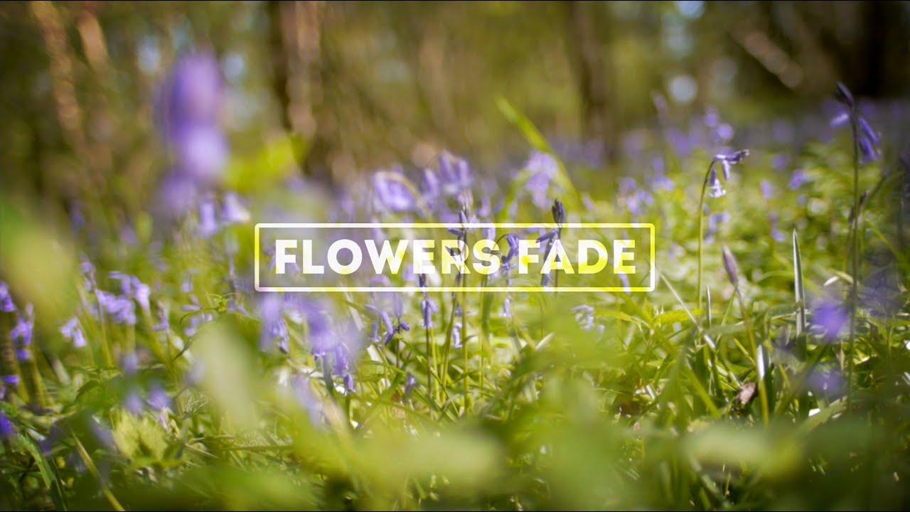 Flowers Fade Lyric Video Jesus Fellowship Songs Youtube