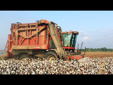 2019 Cotton Picking Has Begun.Case 635 Module Express Cotton Picker