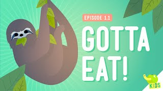 CrashCourse: Gotta Eat thumbnail