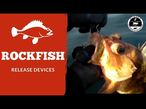 Rockfish Release Devices