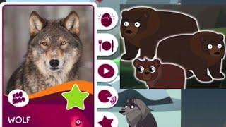 Бурый медведь и волк! Учим лесных животных. Развивающая игра. Zoo Moo