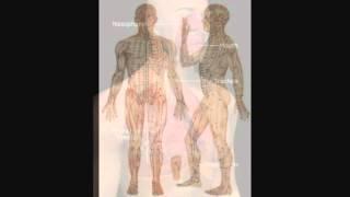 Дыхательная система человека3