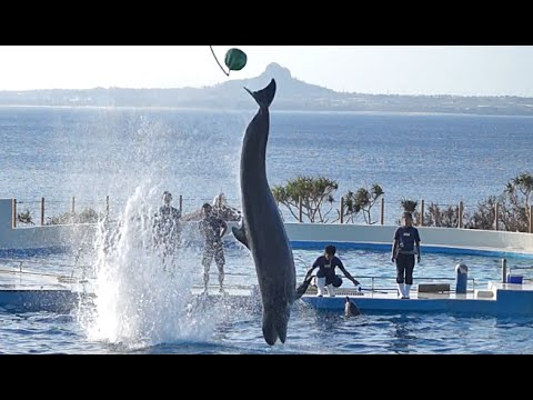 Dolphin show on Okinawa, Japan