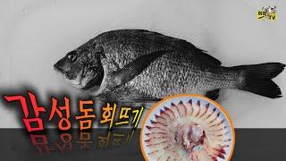 감성돔 회뜨기 / 오로시영상 / 7분 완전정복