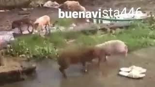 PLEITO EN LAS CALLES DE BUENAVISTA