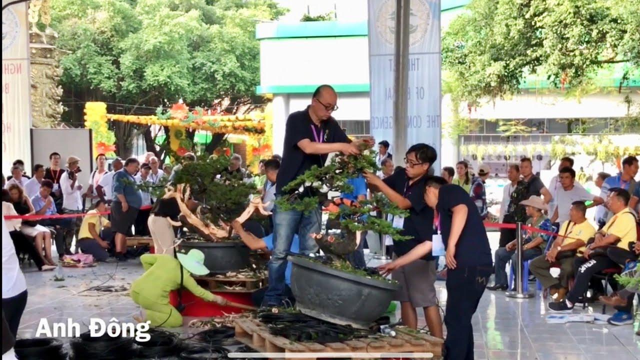 Xem nghệ nhân thế giới biểu diễn bonsai nghệ thuật lễ hội bonsai Châu Á Thái Bình Dương