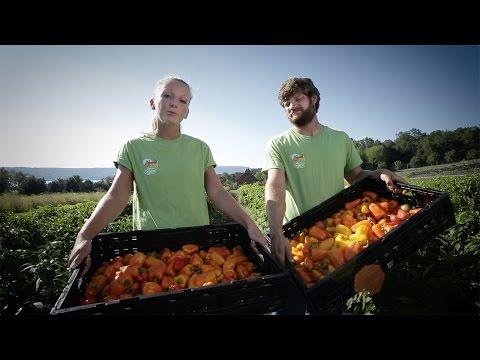 Wegmans Organic Farm: Peppers