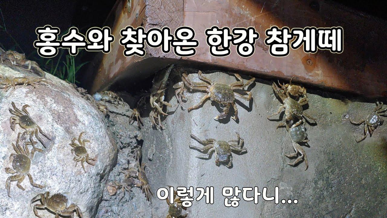 서울 한 복판에 믿을 수 없이 많은 참게가 우글우글 [오브리더]