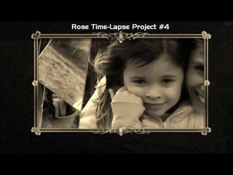 Rose Time-Lapse Project #4. Ageing from baby to 12 years old
