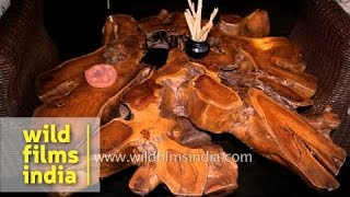 Designer Natural Wood Furniture At Tree House Hideaway