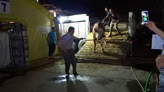 Kurban Çadırı İst Alibeyköyün de Geçe Tırla Geliş Dadaylı Yılmaz Kurbanları Maşallah