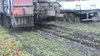Pik Rite HC 290 harvesting tomatoes in muddy conditions