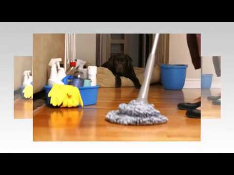 The Cleaning Agency