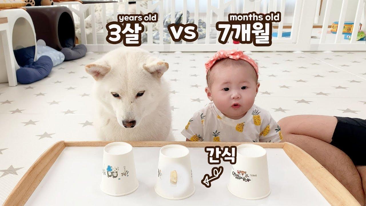 7개월 아기와 3살 강아지의 지능 테스트!! ㅋㅋㅋ