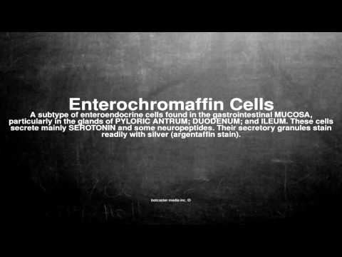 Medical vocabulary: What does Enterochromaffin Cells mean