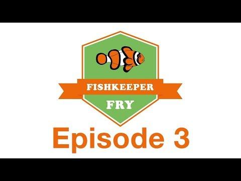 Fishkeeper Fry 2019: Episode 3
