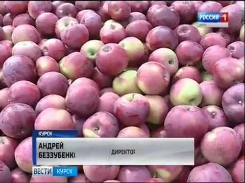 В Обоянских садах будут сажать яблони из Сербии — три фуры саженцев прибыли в регион
