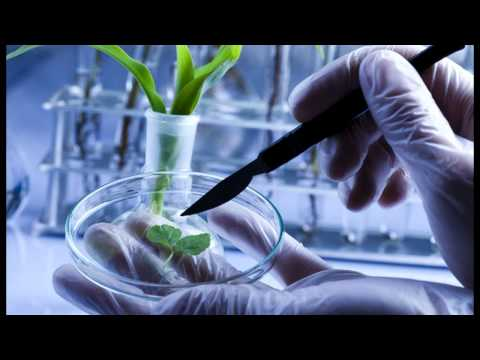 GMO's Exposed! More Scientists Reveal Fraud Over Genetically Modified Food