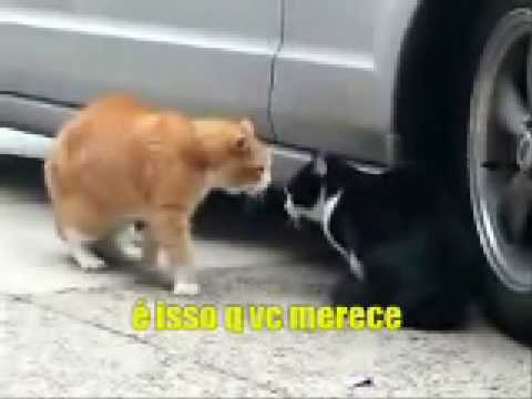 Out Of  Cats Se Subtitles