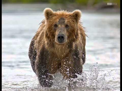 Russian bears and balalaika music.