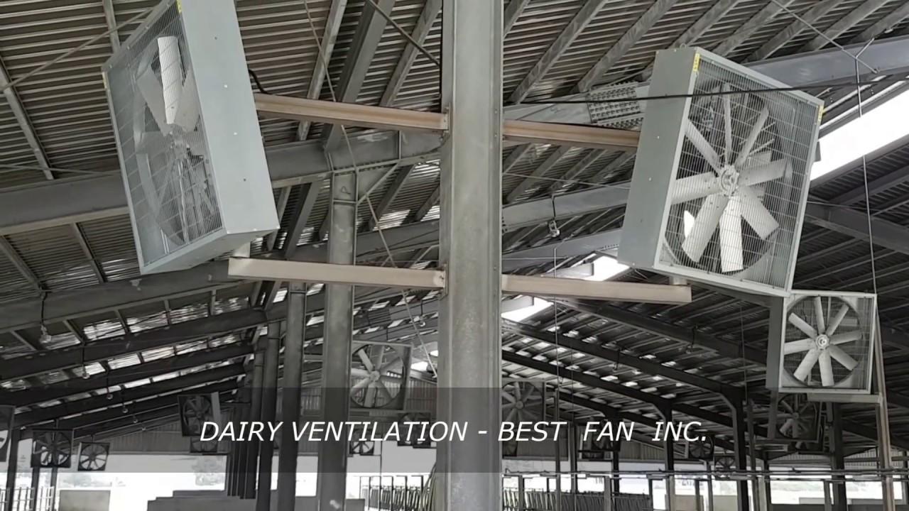 Barn Fans Dairy Fans Box Fans Panel Fans Ventilation Dairy Cow Barn Ʌªè¾² Ĺ³ç‰› lj§å´ Ņ«è'‰å¤§é¢¨æ‰‡ Youtube