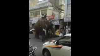شاهد الفيل الهندي نمله تمشي في الشارع elephant india 2015