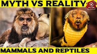 Myth Vs Reality #2 I Do Nipha Virus Bats Have Eyes? Are Dogs Colorblind? Is Dolphin Human-Friendly?