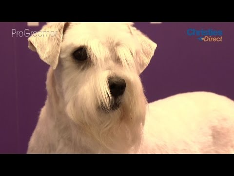 Grooming Guide - How to groom a dog that bites - Pro Groomer
