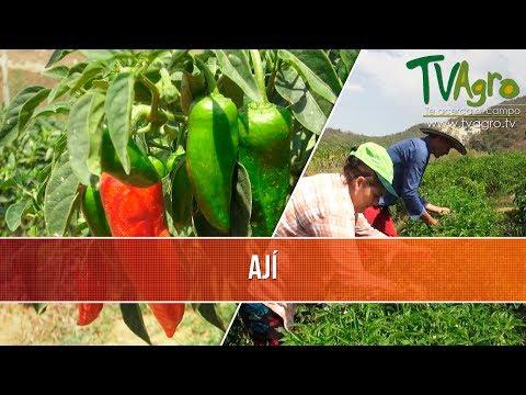 Beneficios de la Produccion de Aji - TvAgro por Juan Gonzalo Angel