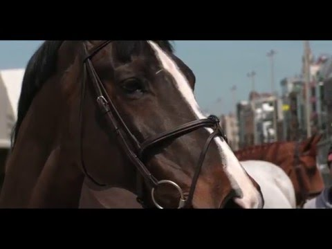 It takes two... Training talk with Harrie Smolders and Jos Verlooy at LGCT Antwerp