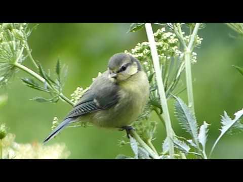 Birds in an Irish Garden