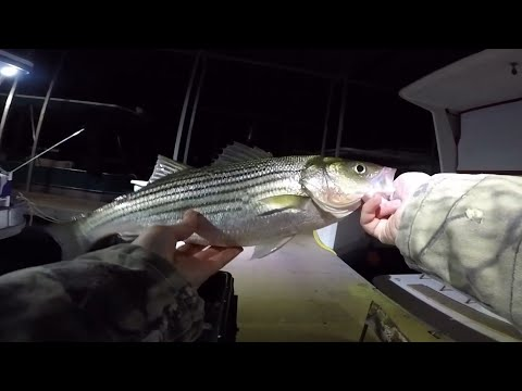 Catching Big Stripers At Lake Powell - Night Fishing Dec. 2019