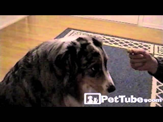 Dog Playing Favorites- PetTube