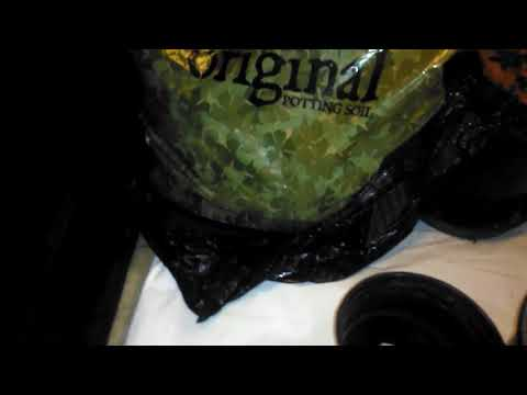 Roots organic potting soil and cannabis clones