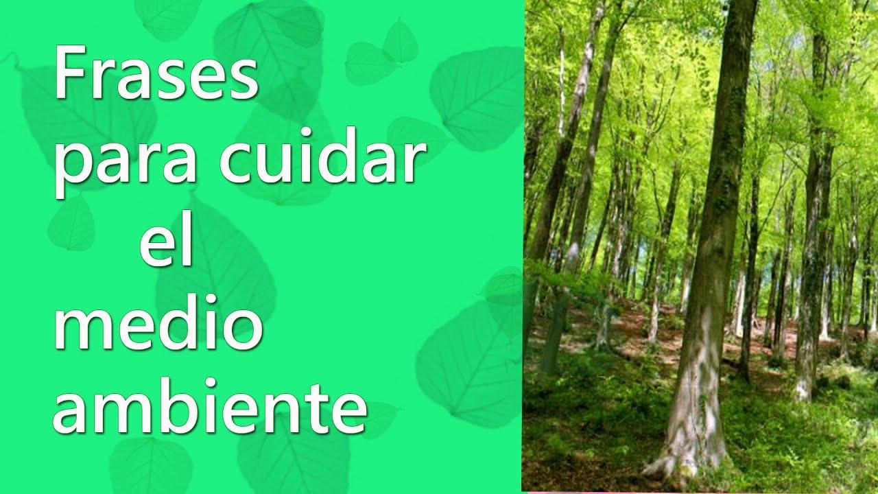 Frases De Ecología Frases Para Cuidar El Medio Ambiente Y Naturaleza