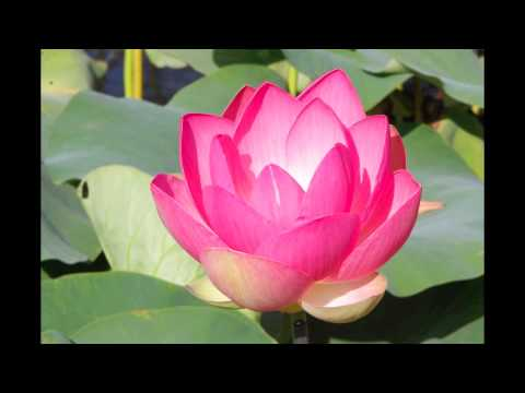 Timelapse lotus 2 youtube timelapse lotus 2 mightylinksfo