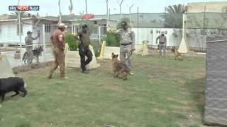 """الداخلية العراقية تنشئ """"مديرية الكلاب البوليسية"""""""
