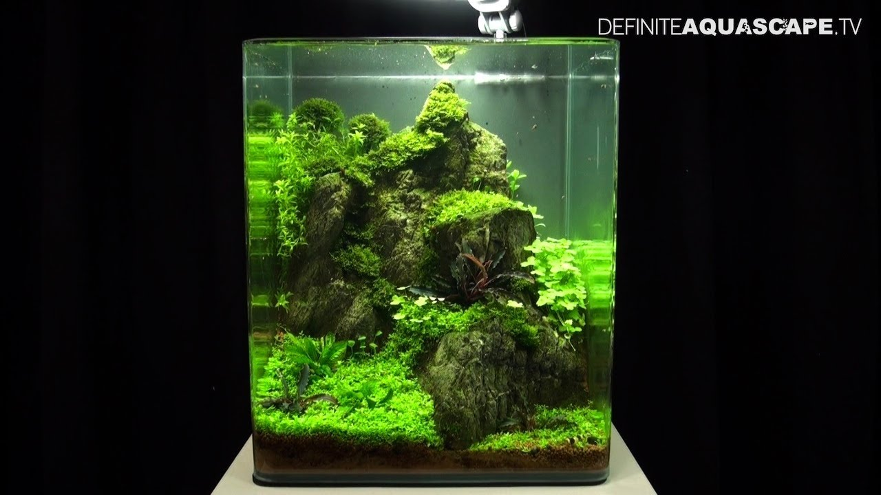 Aquascaping The Art of the Planted