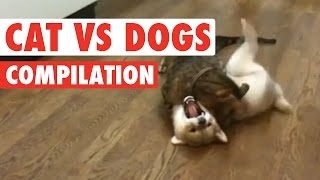 Cats vs Dogs: The Ultimate Fight Battle
